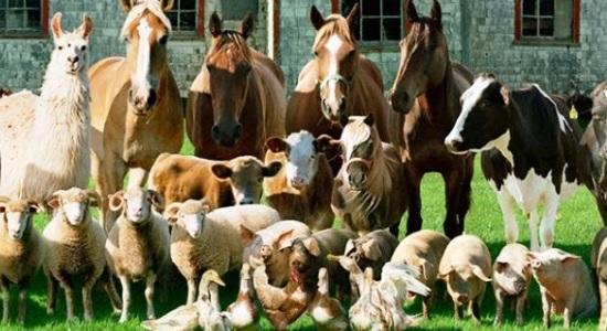 Зоотехническое и ветеринарное оборудование